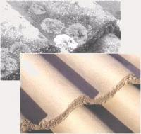 Destructeur total des mousses et lichens avant recouvrement
