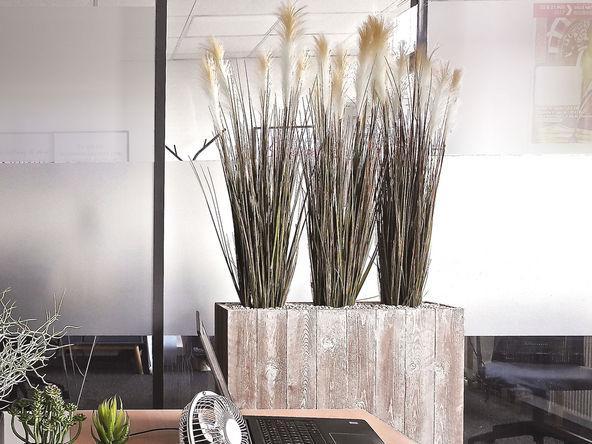 plantes d 39 int rieur comparez les prix pour professionnels sur page 1. Black Bedroom Furniture Sets. Home Design Ideas