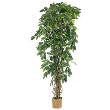 Plante et fleur d 39 interieur tous les fournisseurs for Plante arbuste interieur