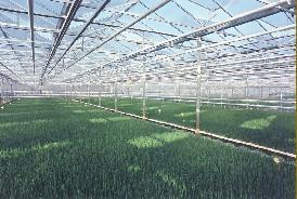 NOS PLANTS - POIVRONS