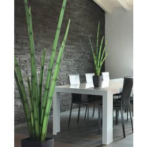 sansevieria en pot hauteur 100 cm pu. Black Bedroom Furniture Sets. Home Design Ideas