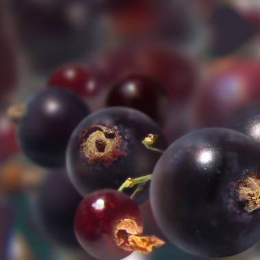 Fruit surgelé cassis (egrappé)