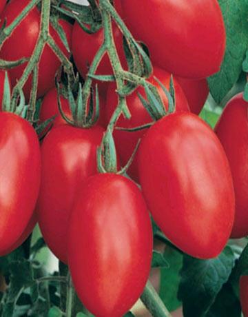 Photos semences de fruits et legumes page 2 for Concombre gynial