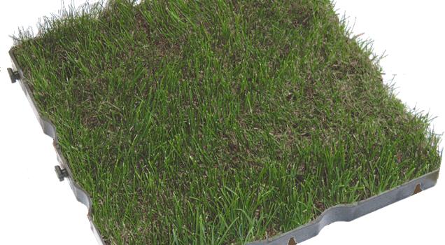 gazon tous les fournisseurs boulingrin herbe herbe fine herbe homogene pelouse. Black Bedroom Furniture Sets. Home Design Ideas