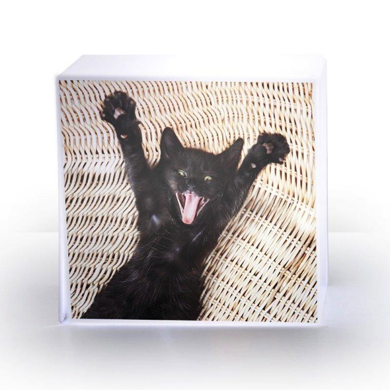 lampe cube chat plexi acrila design. Black Bedroom Furniture Sets. Home Design Ideas