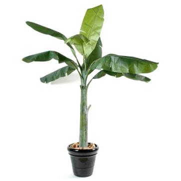 plantes d int 233 rieur rolleco achat vente de plantes d int 233 rieur rolleco comparez les prix