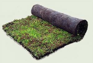 toitures vegetales tous les fournisseurs tapis de fleur sur la toiture couverture vegetale. Black Bedroom Furniture Sets. Home Design Ideas