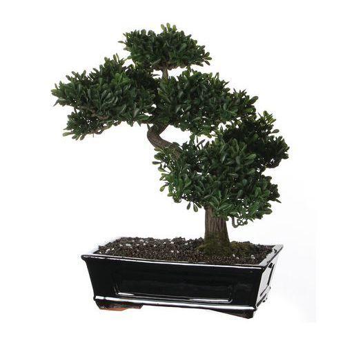 Bonsa aux feuilles de th comparer les prix de bonsa aux for Bonsai artificiel grande taille