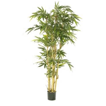 Plante et fleur d 39 interieur tous les fournisseurs for Bambou interieur