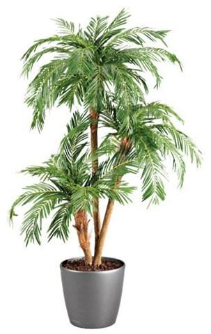 Arbustes et arbrisseaux comparez les prix pour for Plante de pot exterieur