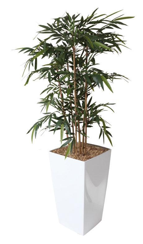 Plante et fleur d 39 interieur tous les fournisseurs for Plante bambou interieur