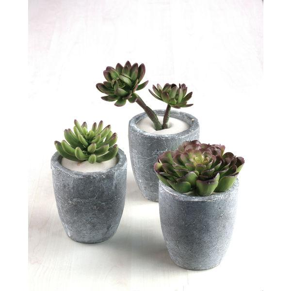 succulentes en pot terre cuite. Black Bedroom Furniture Sets. Home Design Ideas