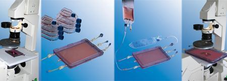 Bioréacteurs petit modèle