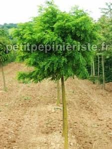 arbres tous les fournisseurs plant d arbre