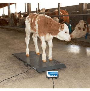 Balance pour animaux - 3 dimensions - 0131405