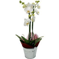 Bouquet de fleurs - orchidée blanche
