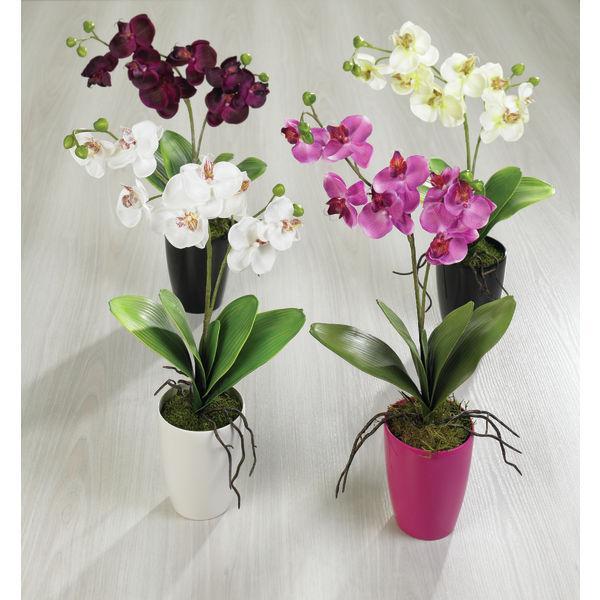 photos plante et fleur d interieur page 1 hellopro fr