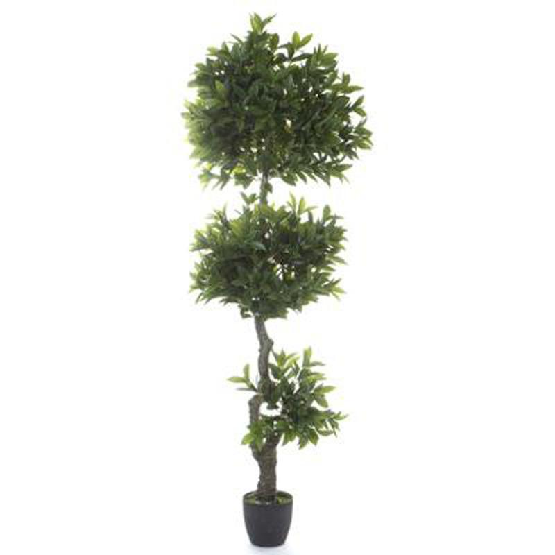 Plantes d 39 int rieur pegane achat vente de plantes d for Achat plante verte en ligne