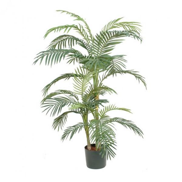Plantes d 39 int rieur comparez les prix pour for Zamioculcas exterieur