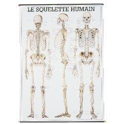 planche anatomique squelette humain comparer les prix de planche anatomique squelette humain. Black Bedroom Furniture Sets. Home Design Ideas