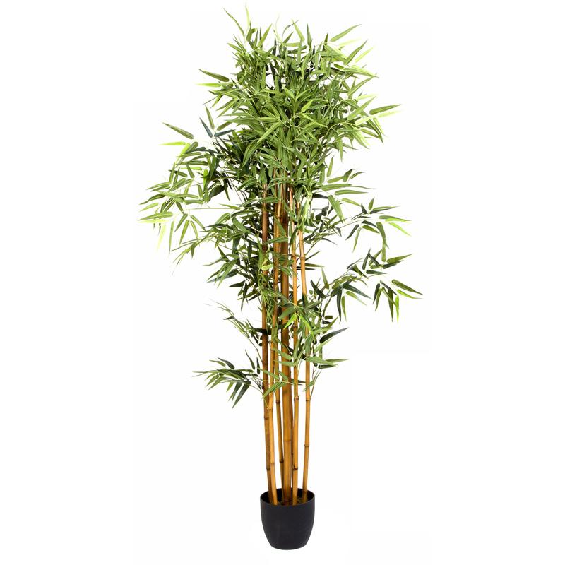 Plante interieur bambou maison design for Achat plante interieur