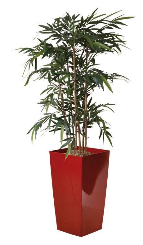 plante et fleur d 39 interieur tous les fournisseurs. Black Bedroom Furniture Sets. Home Design Ideas
