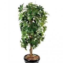 plantes d 39 int rieur mt plantes achat vente de plantes d 39 int rieur mt plantes comparez les. Black Bedroom Furniture Sets. Home Design Ideas