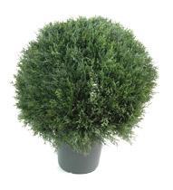 D coration d 39 ext rieur comparez les prix pour for Plantes decoratives exterieur