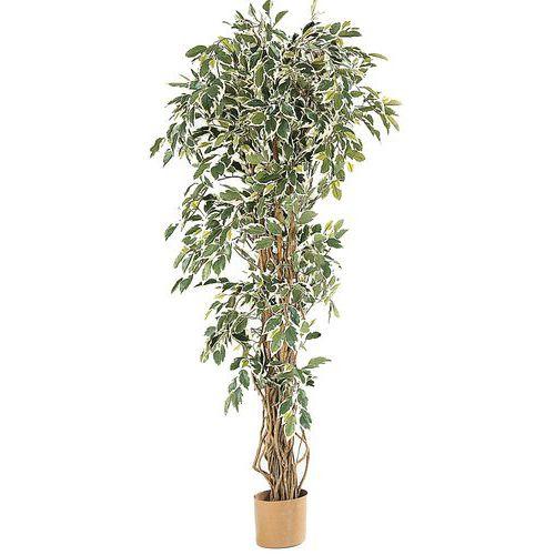 Plantes d 39 int rieur comparez les prix pour for Plante 9 feuilles