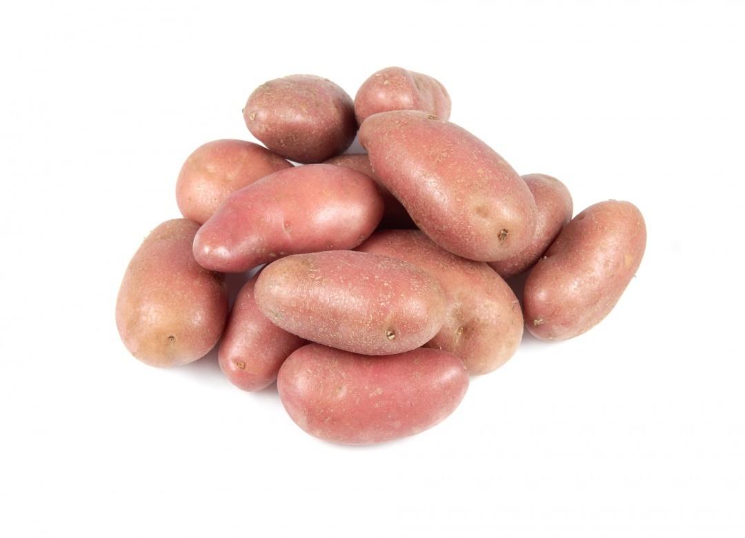 pommes de terre tous les fournisseurs