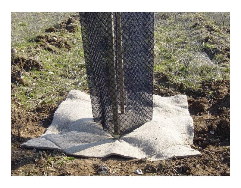 1 PROTECTION PLASTIQUE (HAUT 60CM LARG 14 CM) + 2 TUTEURS (90CM) - - PEPINIÈRES NAUDET
