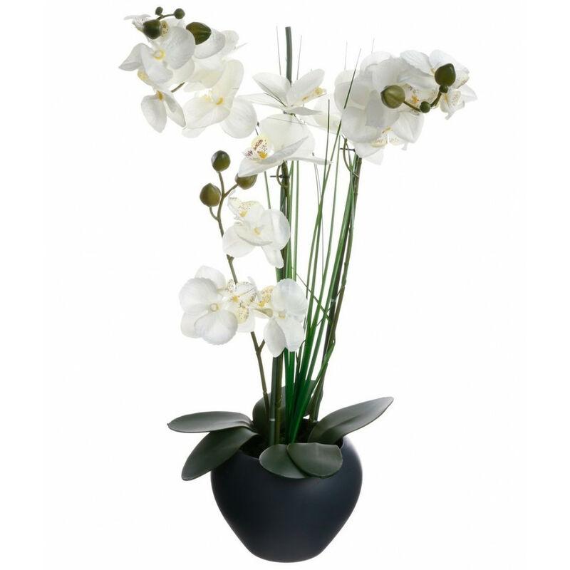 Plante Artificielle Orchidée Gris H 53 Cm Ac Déco Comparer Les Prix De Plante Artificielle Orchidée Gris H 53 Cm Ac Déco Sur Hellopro Fr