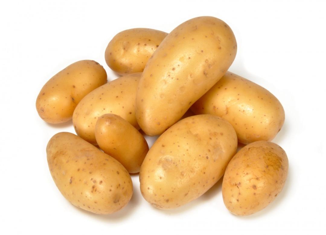 Pommes de terre tous les fournisseurs - Cuisiner les pommes de terre ...