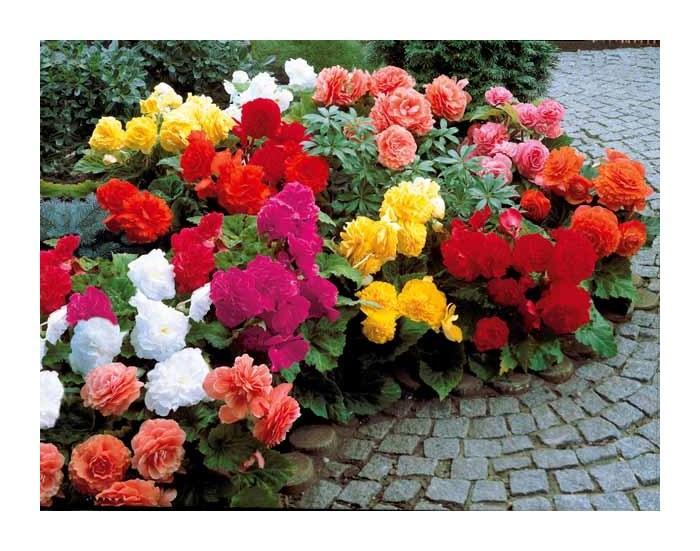 Fleurs et compositions comparez les prix pour for Willemse fleurs