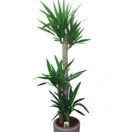 plante verte pour l 39 int rieur tous les fournisseurs de plante verte pour l 39 int rieur sont sur. Black Bedroom Furniture Sets. Home Design Ideas