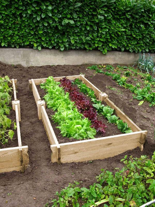 Potager rectangulaire en bois for Petit jardin rectangulaire