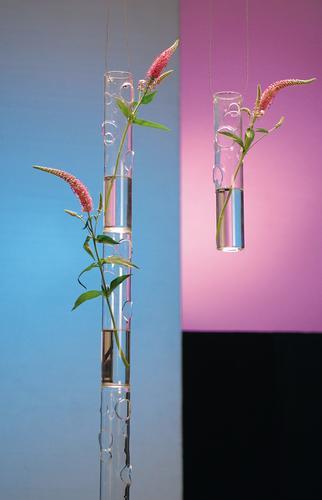 vase soliflore verre