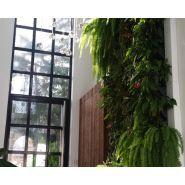 Murs végétaux - Greenplus - Pour l'intérieur