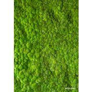 MOSS&PLANTS - Murs végétaux - Greenarea
