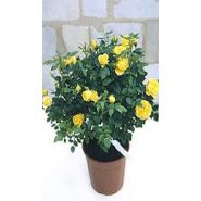 PLANTS EXTRA-FLEURI