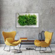LivePicture - Murs végétaux - About Green - Cadre LivePicture : Aluminium thermolaqué