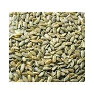 Pipas graines de tournesol pelées grillées salées frit ravich 150grs