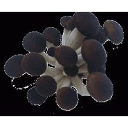 Champignons pholiotes : cueillis en grappes.