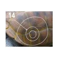 Wf 54p - cible de tir à l'arc - natur'foam - h: 60 cm