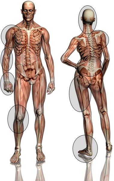 Pédagogie du corps humain