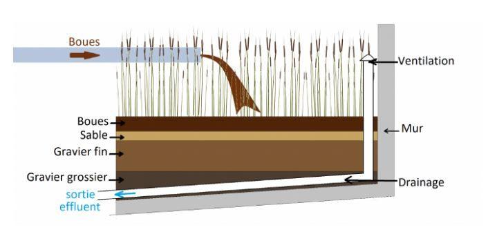 Séchage végétal des boues